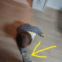 弐太郎、1歳5ヶ月