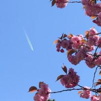 今日も飛行機雲