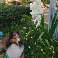 小次郎と夏の草花-グラオラス-