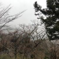 今日の箱根は霧模様