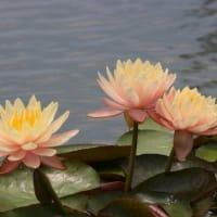 咲くやこの花館シリーズ 7月1日編 No4