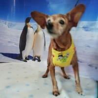 ドッグカフェにペンギンさんとお写真