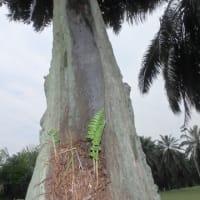 18回マレーシア写真集:何か訴えるものがあるはず。人間と自然との関係。