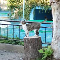 魚くれないかな ― 須坂市動物園