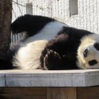 王子動物園に行ってきました。