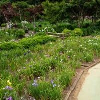 染谷花しょうぶ園にて