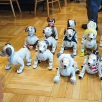 今日はペンギンカフェ!15匹のaiboと戯れましたぞ!