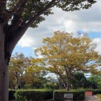 万博公園<花の丘>を後にして。