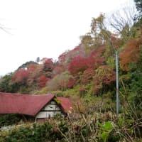 養老渓谷 紅葉状況のおしらせ 2012/11/30