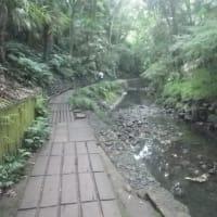 等々力渓谷自由が丘コース 約3.1km
