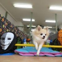 11/24(日)の【ALOHA塾】は、 未病ケアの《Dogscan》  犬のしつけ教室@アロハドギー