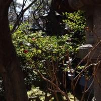 立春の虎ノ門愛宕山