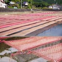 干上がった海苔網