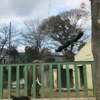 サポーターズデー&みゆきちゃん♪(2月2日)