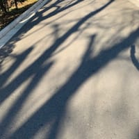 オサンポ walk - 植物plant: 樹の影 the shade of trees