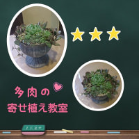 ガーデニング教室 IN 八尾市