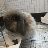 ドルトのウサギちゃん☆彡  ドルトは4 なのよ