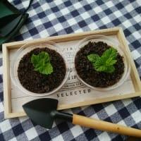 植木鉢の??を作ったのと、ソーダのカニかま、ゴーヤ料理。