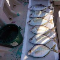沖釣り、カイワリ五目釣り