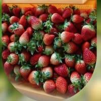 野菜を高品質に多収穫で増収益