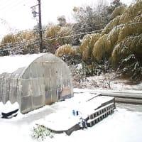 人生初ぐらいの大雪!