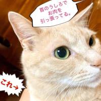 『シュッ』とした猫の作り方。