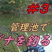【管理池】 ヘラブナを釣る #3