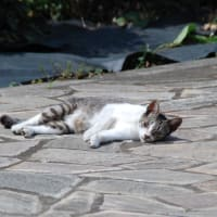 石畳に、だらりん猫、、【調布市】 2021.APR