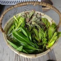 蔓性の野菜を植える場所を