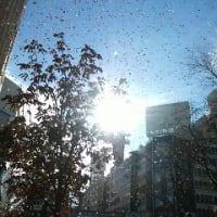 午前のパレード2012