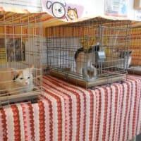 加須市・猫の里親会 9月第1・第3日曜日