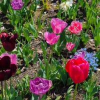 緊張続く春はお身体を整え心も身体も元気に