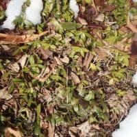 緑色を保つ植物
