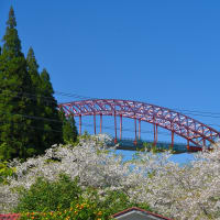 高千穂鉄道・ 早日渡駅跡にも 桜の季節 ~  2020年3月29日 もう散り花が目立ってました。