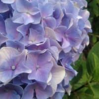 「7月26日」の記憶