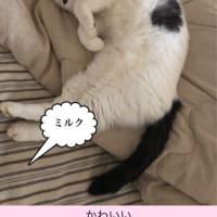 ニャンコの日に#猫の日