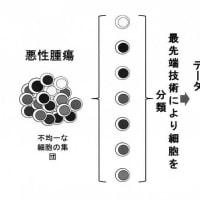 不均一ながん幹細胞及びその用途