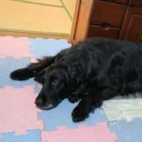 レラ11歳の誕生日