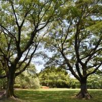 天然塚公園と明野北小学校
