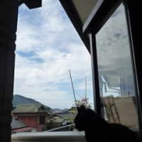 空を読む猫