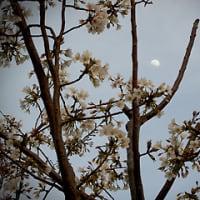 春爛漫、そして・・・