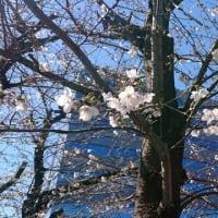 【雑記】咲いた咲いた