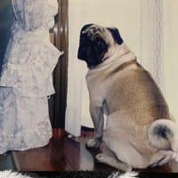 愛犬たちが仲良くしてる思い出のシーンが蘇るお家をお届しました