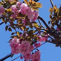 桜が終わっても
