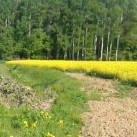 国有林法改正案 「宝の山」を守れるか