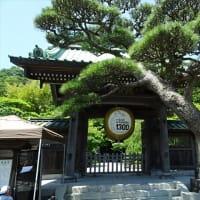 「あじさい」/長谷寺(鎌倉)