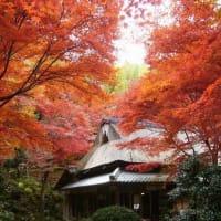 滋賀県湖東の苔寺・イングリッシュガーデン