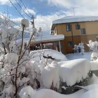 また大雪・・・