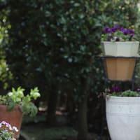 連休中の庭仕事、花壇(葉壇)植栽の完成