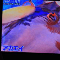 5/27 Dash これエイという魚